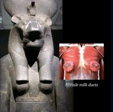 Ancient Egyptian Anatomy